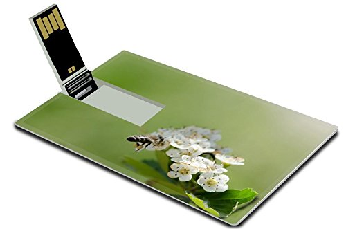 Luxlady 32GB USB Flash Drive 2.0 Memory Stick Credit Card Size Bee on white flowers IMAGE - Nectar Deals Card