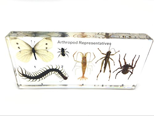 (6 Arthropods)Arthropod(tardigrade) Representatives Paperweight Science Classroom Specimens for Science Education