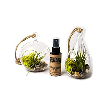 Air Plant River Side Set C, 1 Round Terrarium 1 Teardrop Terrarium Combo Pack with 2 oz. Fertilizer