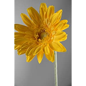24 Royal Yellow Gerbera Daisy Sprays - Excellent Home Decor - Outdoor Indoor 32