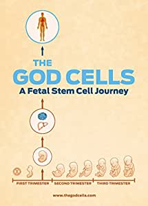 The God Cells: A Fetal Stem Cell Journey