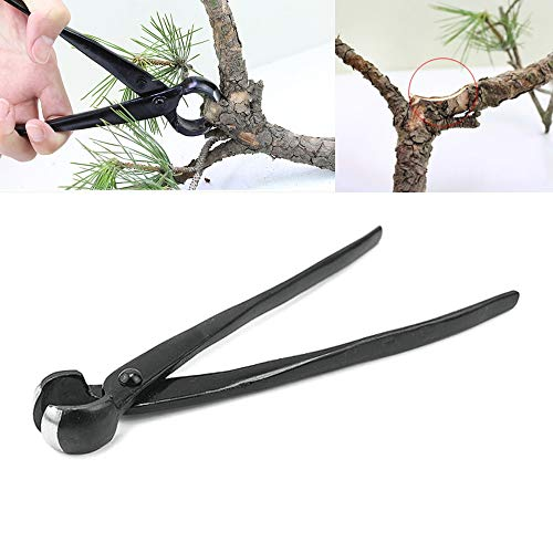 Best Bonsai Cutters