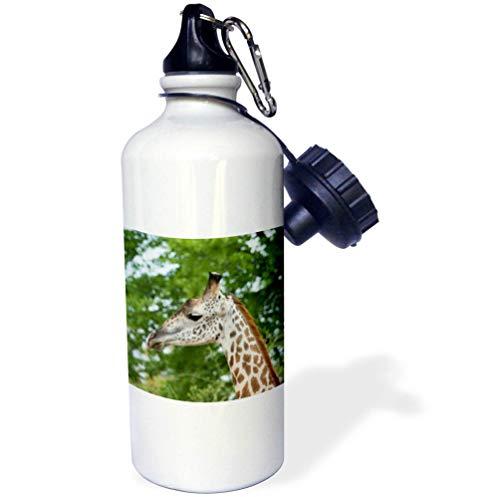 3dRose Danita Delimont - Giraffes - Africa, Zambia, South Luangwa National Park. Thornicrofts Giraffe. - Flip Straw 21oz Water Bottle (wb_312572_2)