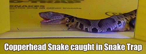 Snake Trap Humane - Buy Online in UAE.   Lawn Garden ...