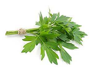 Lovage 500 seeds Levisticum officinale * herb * ez grow CombSH E61
