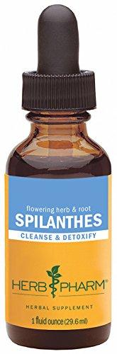 Pharm hierba certificada orgánica Extracto de Spilanthes para la limpieza y la desintoxicación - 1 onza