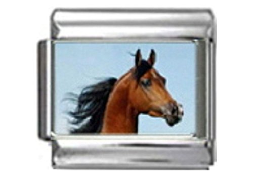 ARABIAN STALLION HORSE Photo Italian Charm 9mm Link - 1 x HO058 Single Bracelet Link