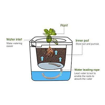 UKan 4 Inch Self Watering Planter, (3-Pack) Plastic Plant Pots with Automatic Irrigation System Modern Decorative Gardening Pots for Indoor Plants, Succulents, Herbs, Flowers, Cube, White : Garden & Outdoor