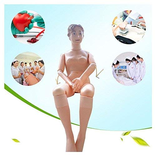 OPNG 160cm Life Size Rubber Demonstration Manikin Anatomical Human Model for Nursing Medical Training Teaching & Education Supplies Female Band Spare Module from OPNG