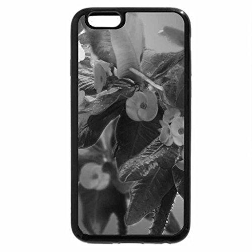 iPhone 6S Plus Case, iPhone 6 Plus Case (Black & White) - Forevergreen