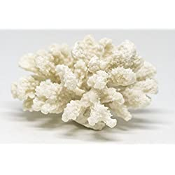 "Nautical Crush Trading White Resin Sea Coral Piece | Aquarium Ornament for Decoration | Sea Coral for Craft (2.5"" x 4"")"