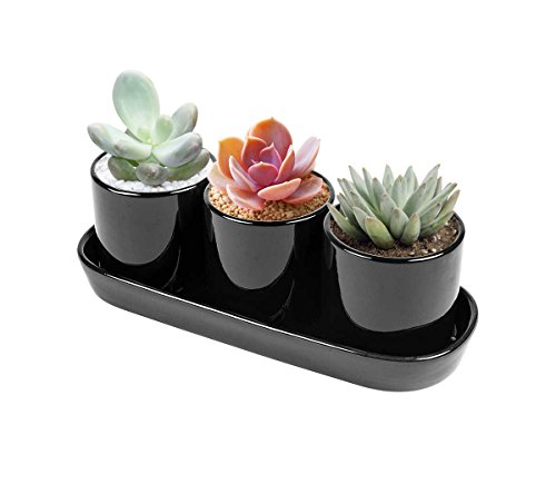 Vencer Contemporary Design Ceramic Succulent Planters - Flower Pots & Handled Display Tray,Office Desktop Potted Stand,Home & Office Decor Accent,Set of 3,Black,VF-019B by Vencer