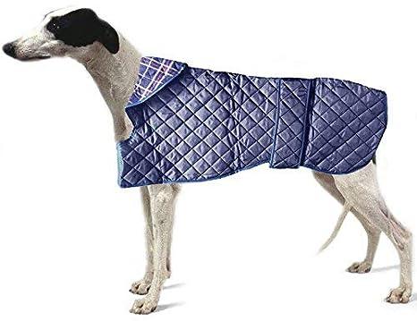 Dogs & - Abrigo para Perro con Forma de co. Acolchado Azul Ligero. Whippet