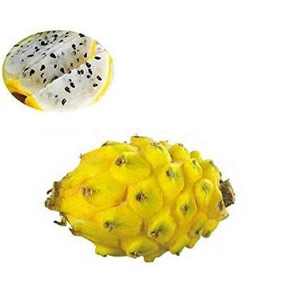 Fercisi 50pcs Rare Pitaya Fruit Seeds Bonsai Planting Home Farm Garden Fruits : Garden & Outdoor