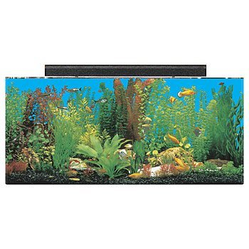 "SeaClear 30 gal Show Acrylic Aquarium Combo Set, 36 by 12 by 16"", Clear"