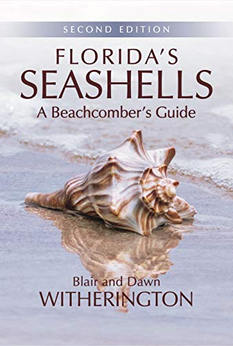 - Florida's Seashells: A Beachcomber's Guide