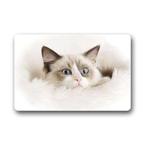 Shock Shocking Custom lavable Felpudo gato interior/al aire libre Felpudo; (W) 15.7-inch por 23.6: Amazon.es: Hogar