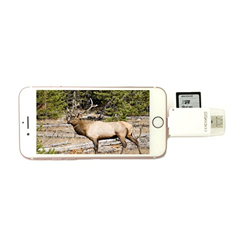 Juslink Trail and Game Camera Viewer for iPhone/Android / Samsung, iPad,Micro SD, SD Card Reader for iPhone/USB / Android