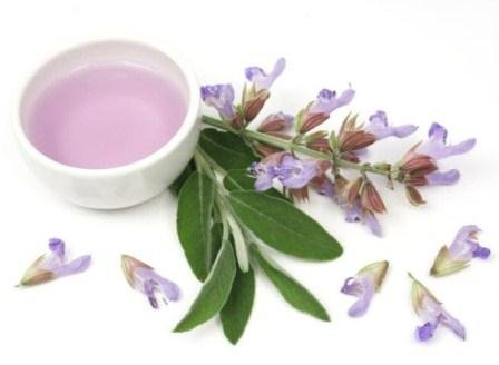 Amazon.com: Salvia (Salvia Sclarea) - Aceite Esencial 100% Puro de Grado Terapéutico - Propiedades relajantes - Ideal para ayudar a tonificar la piel (0.34 ...