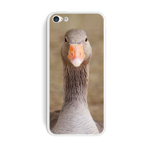 graphics-and-more-gray-grey-goose-bird-protective-skin-sticker-case-for-apple-iphone-5c-set-of-2-non