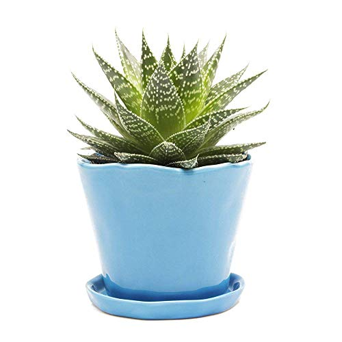 Chive - 5 Inch Big Tika, Large Succulent and Cactus Pot and Saucer Ceramic Flower and Plant Container with Drainage Hole and Detachable Saucer Great for Indoor/Outdoor Garden Decor (Azure Blue) ()