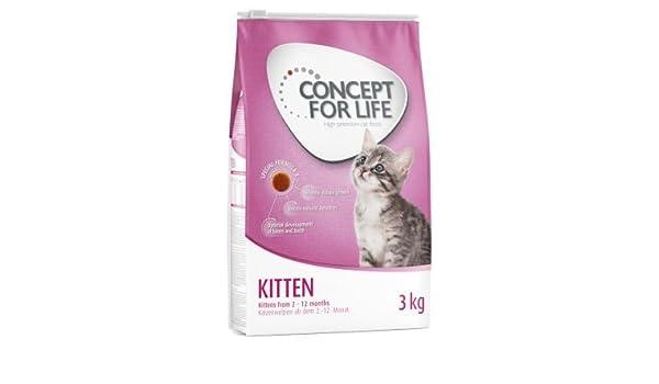 Concepto para gatito de vida. Un alimento saludable para gatos ...