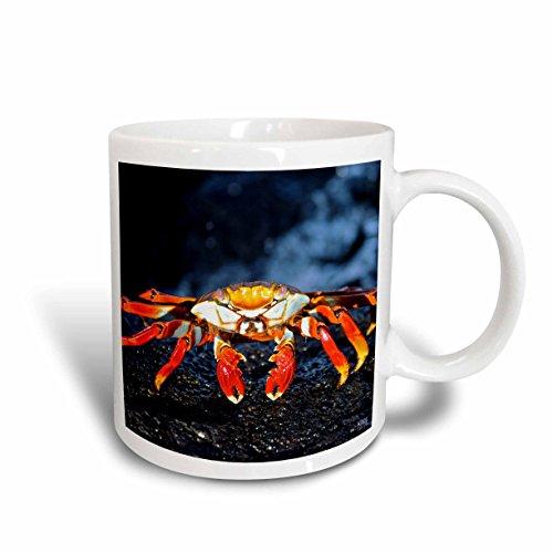 3dRose 10134_1 Sally Lightfoot Crab, grapsus,Santiago IslaIslandnd Galapagos-Ceramic Mug 11-Ounce Multicolored