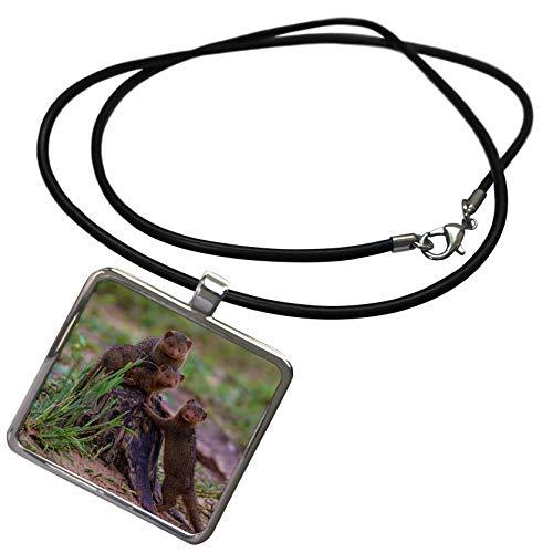 - 3dRose Danita Delimont - Mongoose - Africa. Tanzania. Dwarf Mongoose Family in Tarangire National Park. - Necklace with Rectangle Pendant (ncl_312522_1)