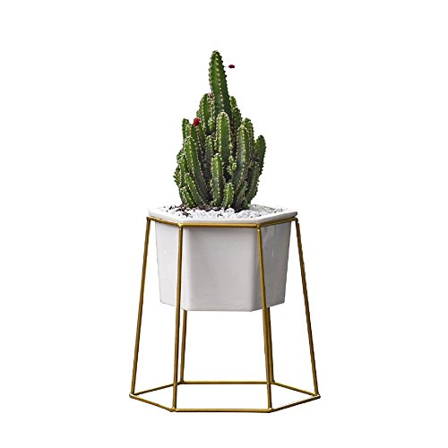 6 inch Modern Garden White Ceramic Round Bowl with Metal Air Plant Stand for Succulent Planter Cactus (Hexagon, White+Gold) by GardenBasix