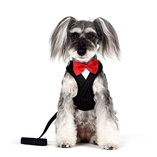 Dog Harness Dress Set - Alfie Pet by Petoga Couture - Oliver Tuxedo Step-in Harness and Leash Set - Color: Black, Size: Medium