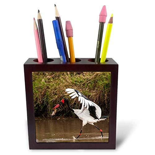 3dRose Danita Delimont - Storks - Kenya, Saddle-Billed Stork, with Fish - 5 inch Tile Pen Holder (ph_310437_1)