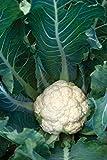 Burpee Cauliflower 'White Corona' Hybrid, 6 Plants for Fall Planting