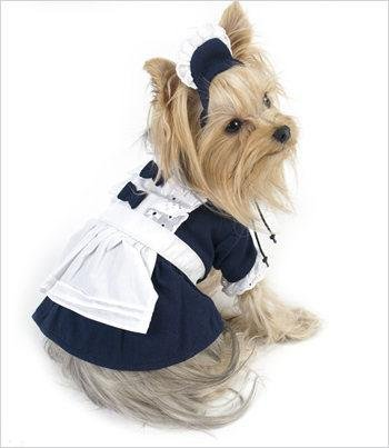 Image result for french maid dog costume