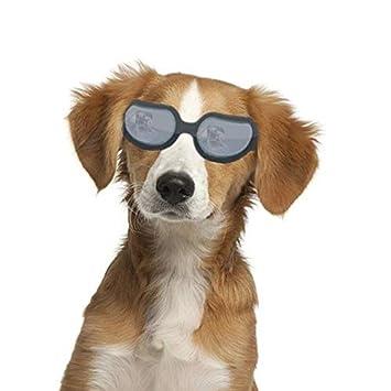 7feda110d32d8a Chiens Lunettes de natation pour animal domestique Moto Lunettes de soleil  Lunettes de protection contre les