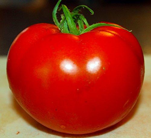 Celebrity Tomato 45 Seeds -Disease Resistant!