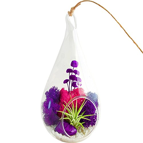 Bliss Gardens Air Plant Terrarium Combo Kit with 4