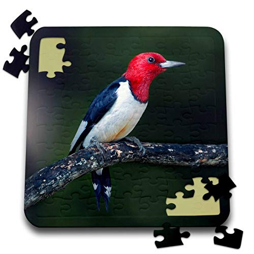 3dRose Stamp City - Birds - A red-Headed Woodpecker on The Branch of a Tree Posing for The Camera. - 10x10 Inch Puzzle (pzl_290777_2)