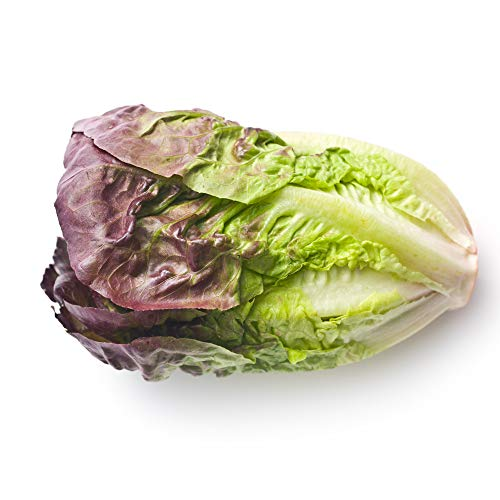Red Romaine Lettuce Seeds, 1000+ Premium Heirloom Seeds, On Sale, (Isla's Garden Seeds), Non Gmo Organic, 90% Germination Rates, Highest Quality, 100% Pure