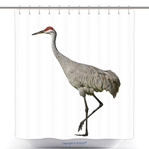 [Fun Shower Curtains Sandhill Crane Isolated On White Latin Name Grus Cannadensis 83330545 Polyester Bathroom Shower Curtain Set With Hooks] (Discount Latin Costumes)