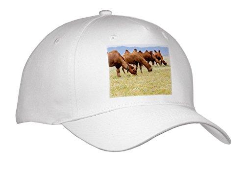 Gobi Desert Camel - 4
