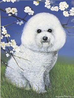 Fiddlers Elbow Bichon Frise Dog Breed Garden Flag 12″ x 16″ For Sale