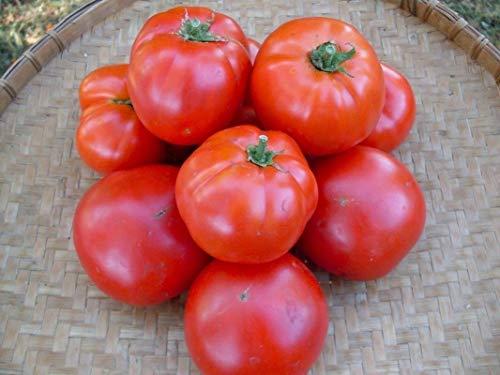 Siletz Tomato Seeds (20 Seed Pack)