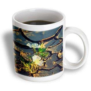 Danita Delimont - Flowers - USA, California, Anza-Borrego Desert SP. Dune Primrose in Cracked Mud. - 11oz Mug (mug_208812_1)