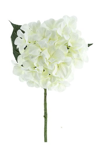 Renaissance 2000 White Single Large Hydrangea Stem with 3 Leaves, - Stem Hydrangea