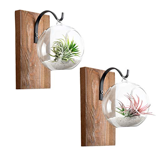 Dahey Wall Glass Planter with Wood Board Rustic Decor Air Plant Holder Hanging Terrarium Wrought Iron Hooks for Indoor Office Home Decorations, Orb 2 Set ()