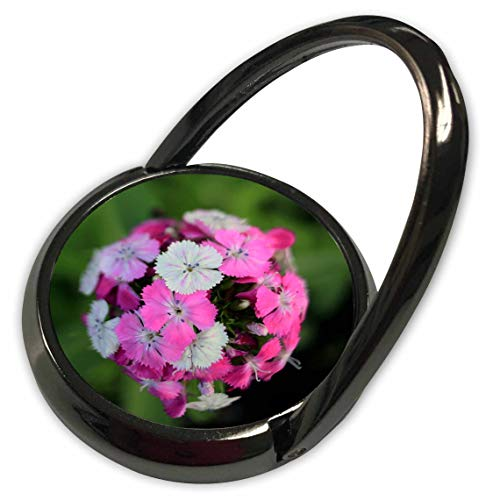 3dRose Stamp City - Flowers - Close up Photo of Dianthus barbatus - Sweet William in Shades of Pink. - Phone Ring (phr_308721_1) ()