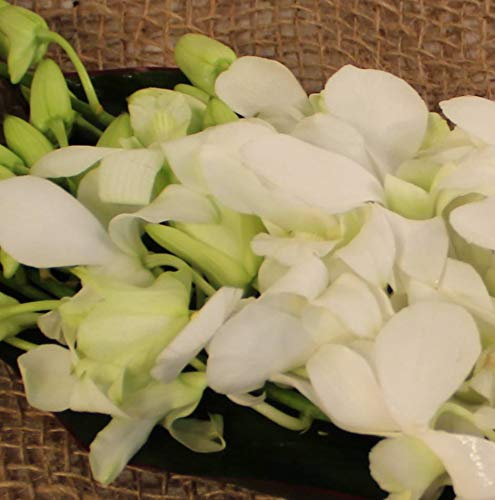 Athena's Garden Live White Cut Orchids by The Box of 7 Bunches, by Athena's Garden (Image #2)