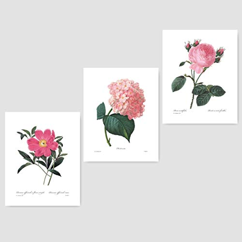 ((Set of 3) Botanical Wall Art (Pink Room Decor, French Flowers, Redoute Prints) Peony, Hydrangea, Rose - 8x10 Unframed)