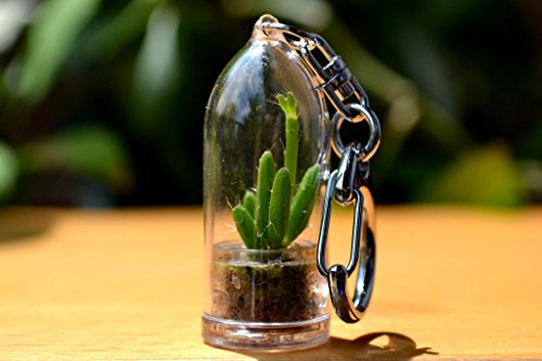 Coral Cactus Terrarium Keychain Accessory. Gifts for Women, Gifts for Men. Nature Gift. (Key Chain Plant)