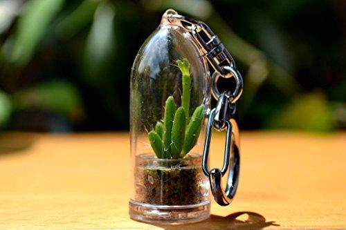 Coral Cactus Terrarium Keychain Accessory